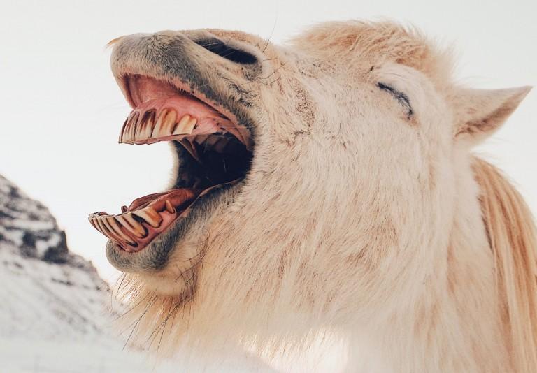 5 Gründe, warum Sie häufiger lachen sollten