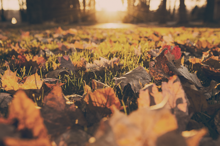 Yoga Übungen für den Herbst