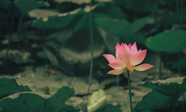 Das Ashtanga-Mantra: N°15
