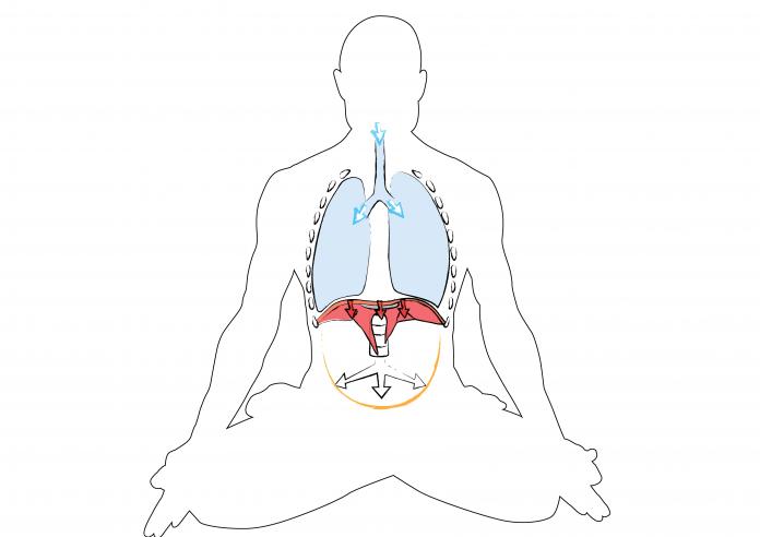 Dr. Ronald Steiner: Bauchatmung - So machen Sie es richtig! - Yoga ...