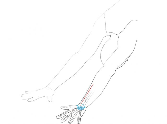 Dr. Ronald Steiner: Anatomie: Wie aus Flügeln Wurzeln werden - Yoga ...