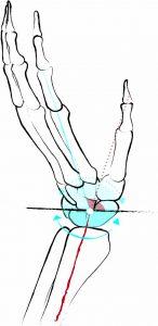 Anatomie Handgelenk Yogaworld