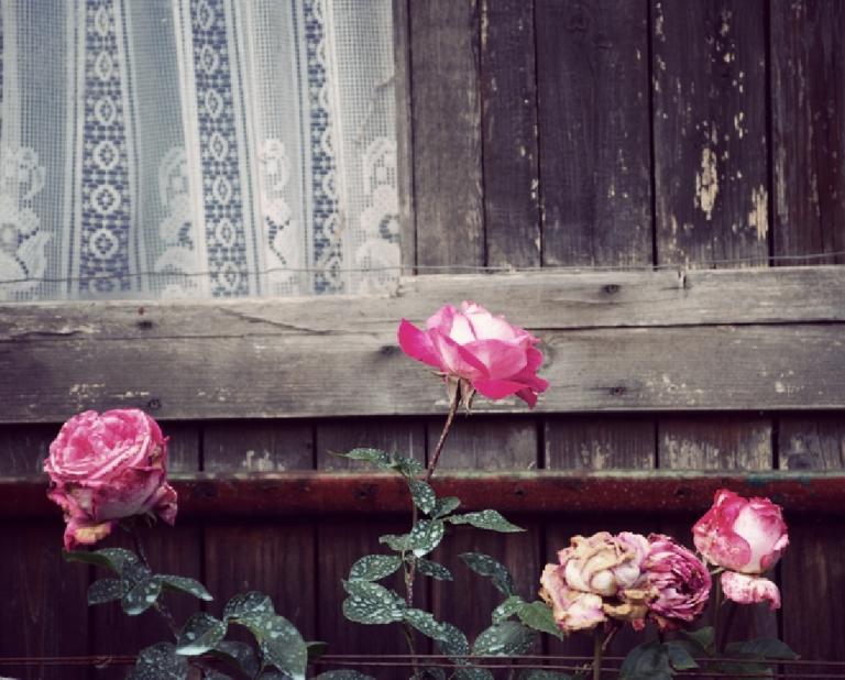 Schönheits-Tipp: Im Namen der Rose