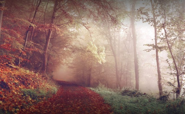 Montags-Mantra: Den Weg finden