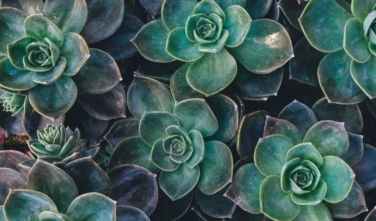 Montags-Mantra: Offen wie eine Blume