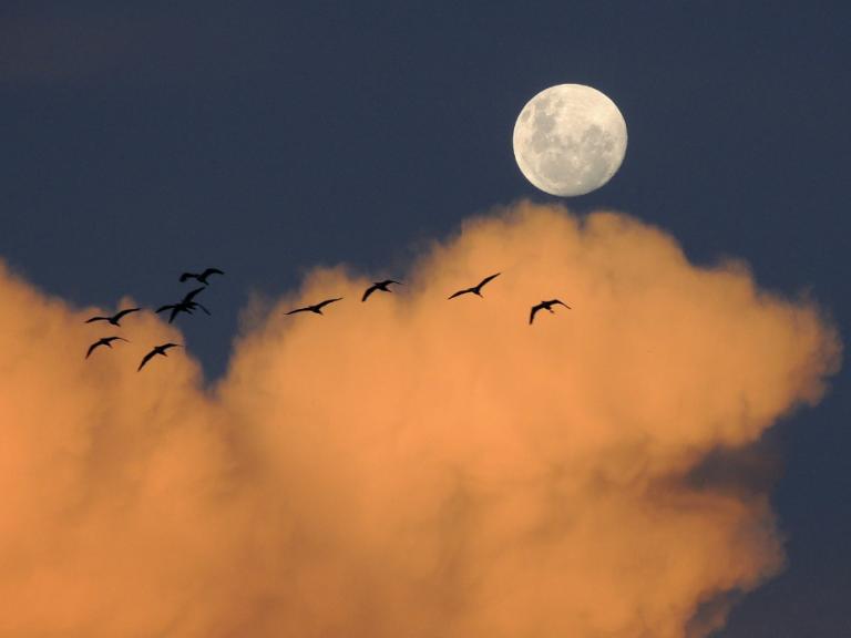 Mond und Yoga: Welche Verbindung besteht?