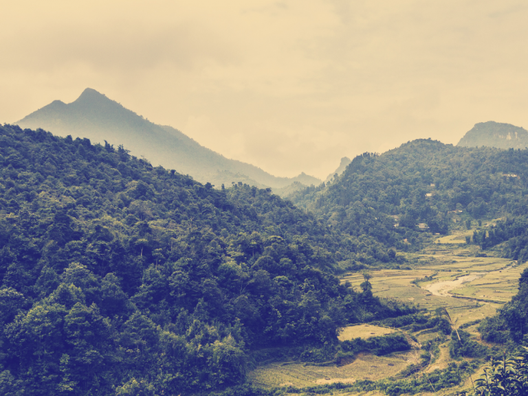 Vietnamesische Verlockung: Bo Kho Chay