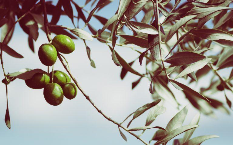 Kosmetik-Tipp: Natürlich Schön mit Olivenöl