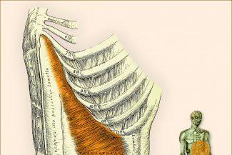 Anatomie / Illustration: Cordula Wolff fuer AYI.INFO