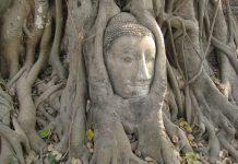 Buddha_Baum_Zufriedenheit_Montagsmantra