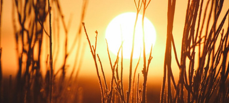 Der Sonnengruß – Eine Einleitung