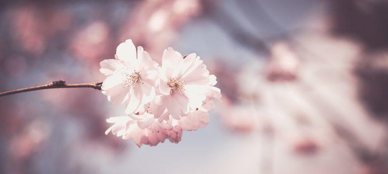 Bring dein Ich zum Blühen – Teil 2