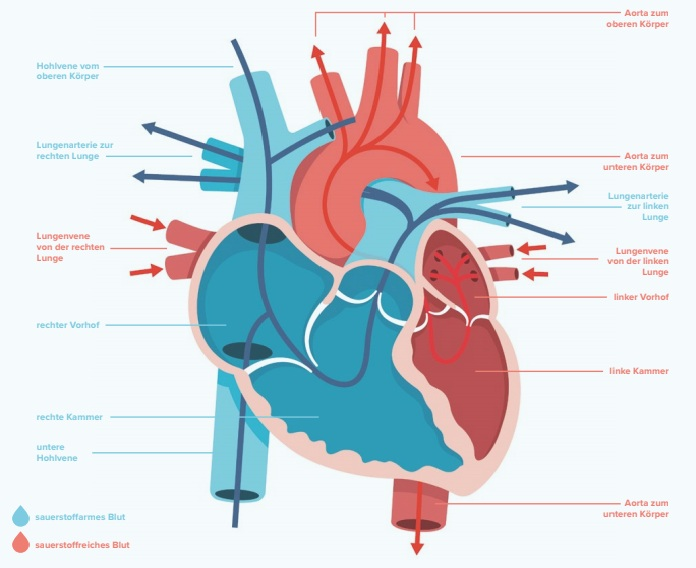 Risikofaktoren Herz: So hilft Yoga gegen Stress